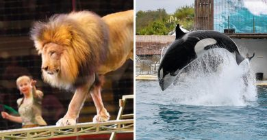 It's Official: France To Ban Use Of Wild Animals In Circuses