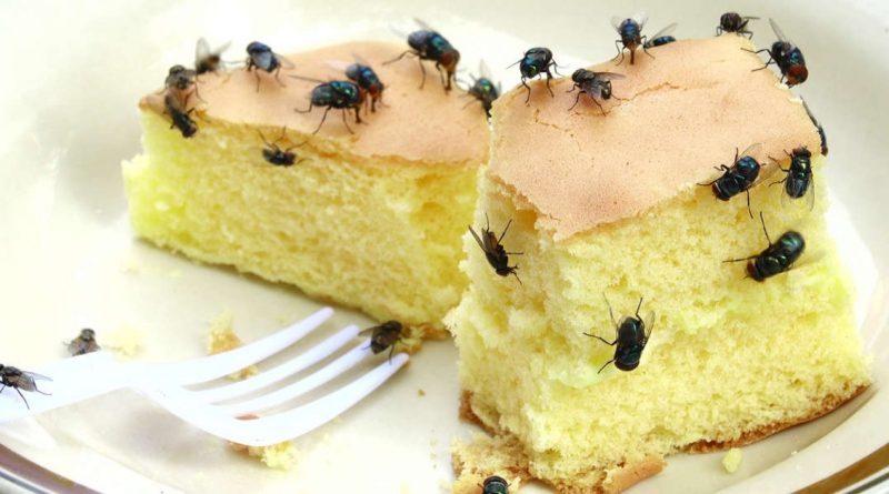 This Is What Happens When A Fly Touches Your Food