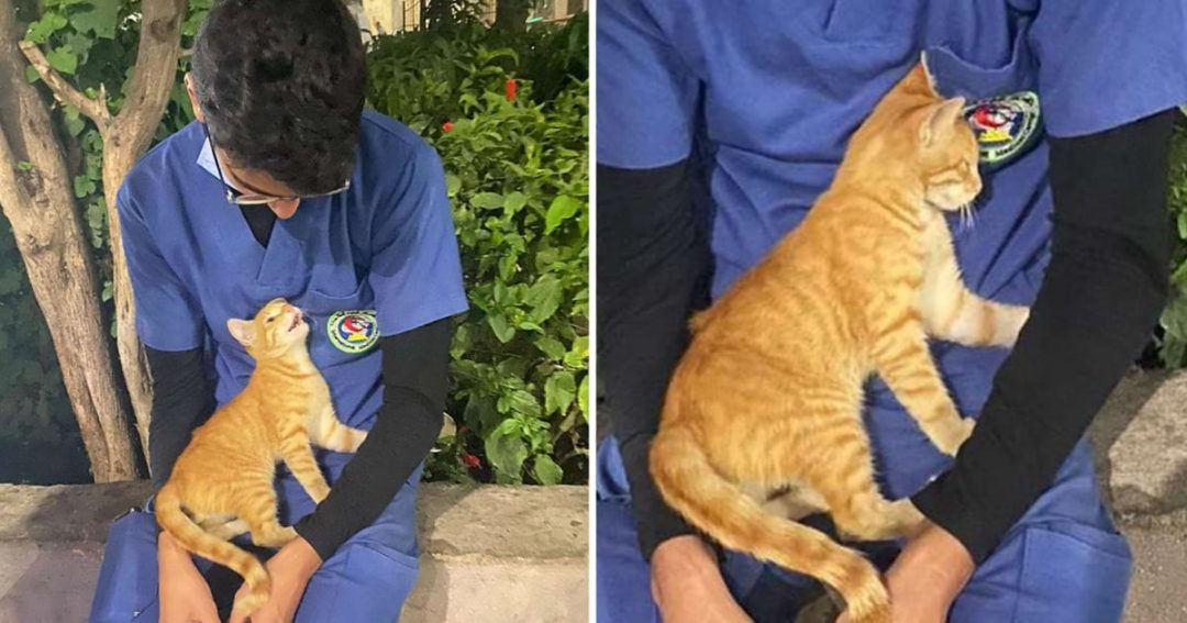 Stray Cat Comforts Nurse On 12-Hour Shift For 20 Days Straight