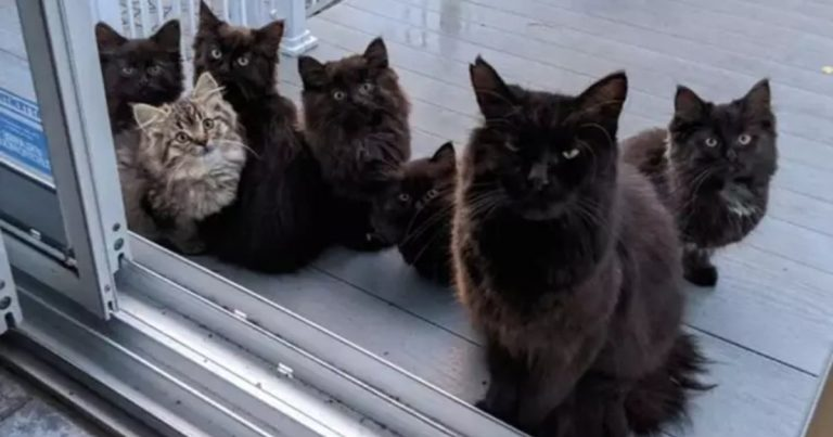 Stray Cat Brings Her Babies To Meet The Woman Who Helped Her