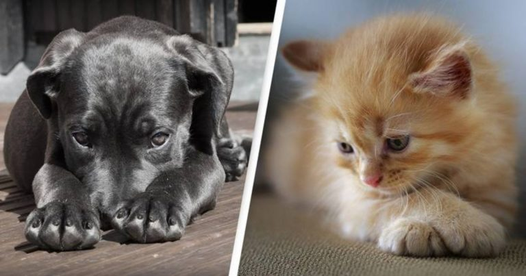 Animal Abusers In Australia To Undergo 2 Years In Prison And $110,000 Fine