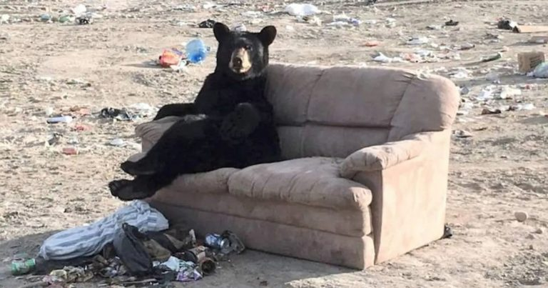 Woman Shocked When She Sees Bear Chillin' On A Couch With His Legs Crossed
