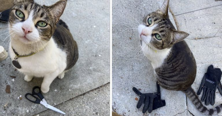 Meet China, The Cat That Steals Stuff From Neighbor