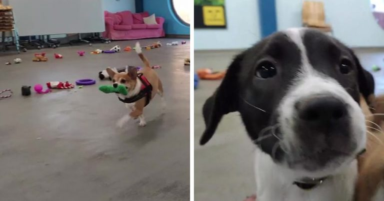 Here's What Happened When Dogs Were Made To Pick Their Own Christmas Gifts