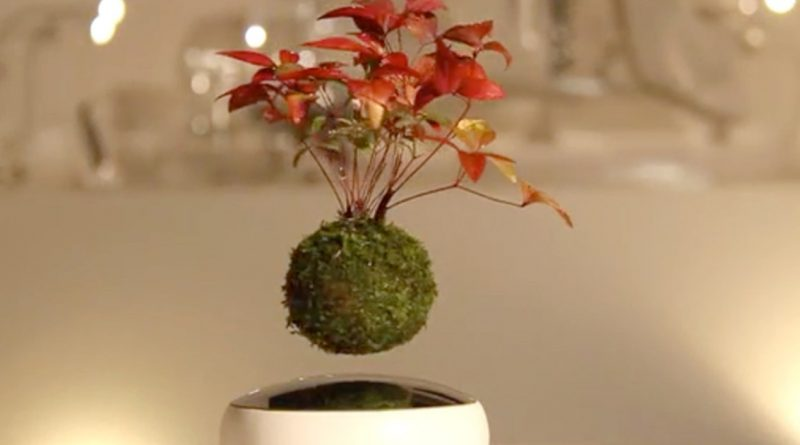 Floating Bonsai Trees Are Now A Real Deal, And It's Pretty Amazing