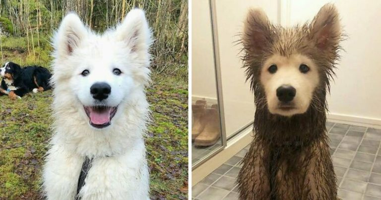 People Are Posting Pictures Of Hilarious 'Malfunctioning' Dogs