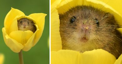 Photographer Tiptoes Through Tulips To Capture These Cute Mice