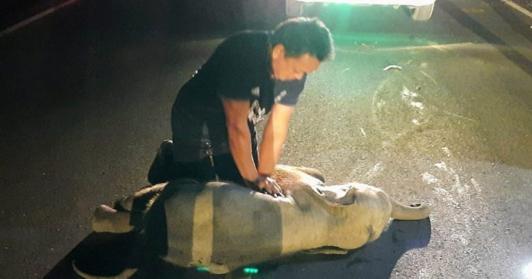 Off-Duty Rescue Worker Performs CPR On Baby Elephant Hit By Motorcycle