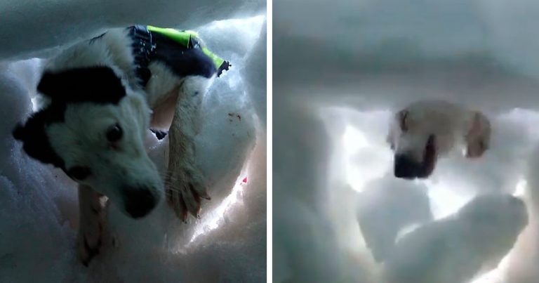 This Man Films A Mountain Rescue Dog Saving Him When He's Buried In Snow