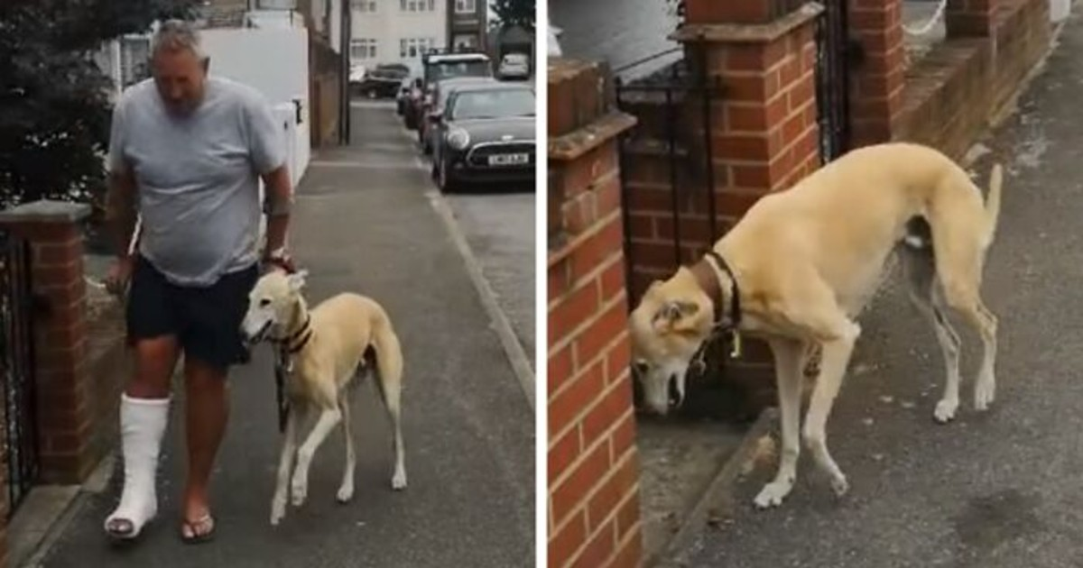 Owner Treats Limping Dog Without Knowing He Was Copying The Owner Out Of Sympathy