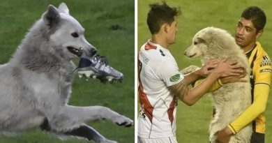 Dog Interrupts Pro Soccer Match, Gets Adopted By Player Who Carried Him Off The Field