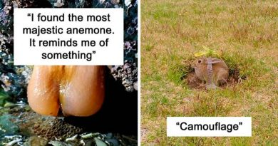 20 Crappy Wildlife Photos That Are So Bad They're Good