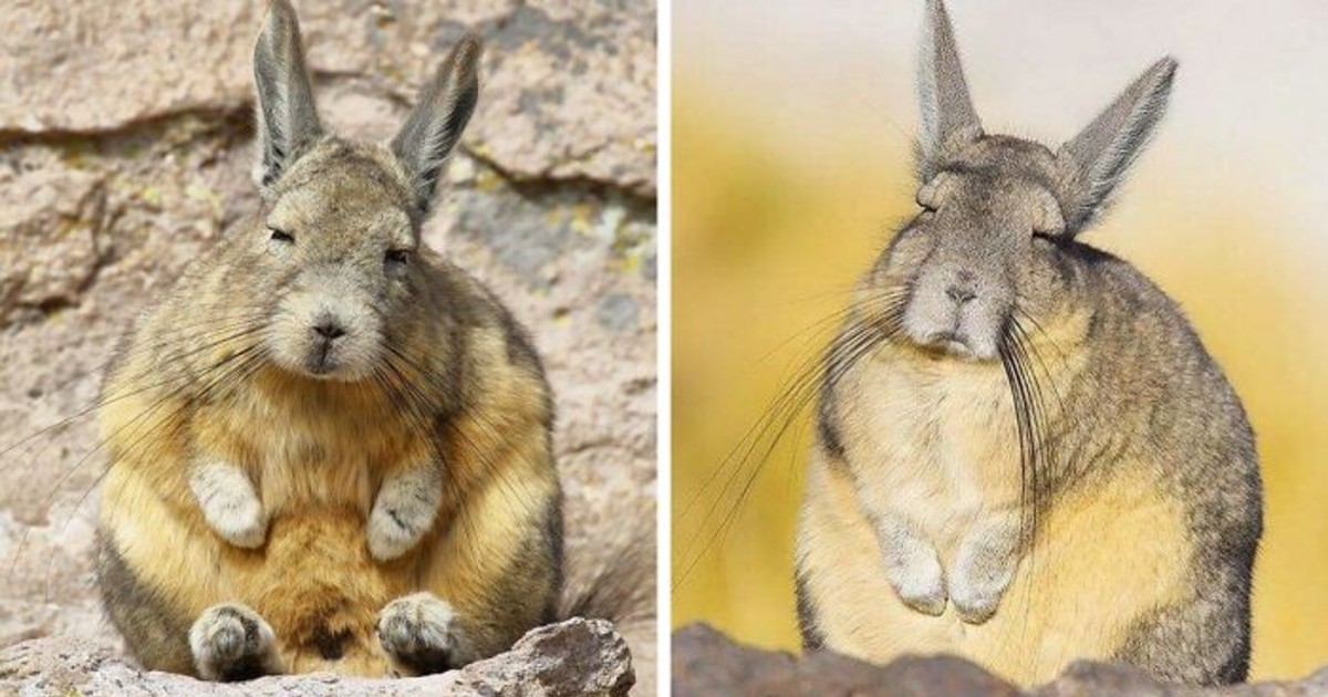 This Lazy-Looking And Unbothered Creature From South America Is So Relatable
