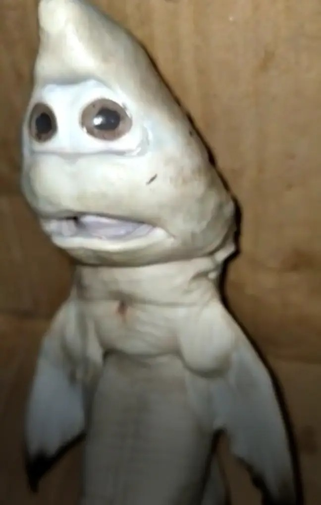 Baby shark with human face