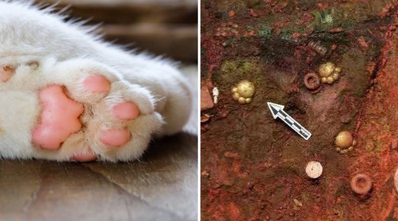 5 Cat-Paw Shaped Golden Instruments Unearthed From Ancient Cemetery In Chin