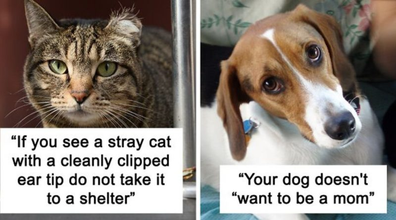 20 Vets Share Things All Pet Owners Should Know