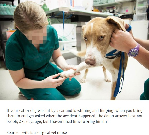 Vets share thoughts on pets