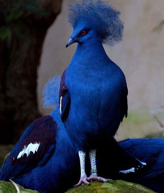 Special and fascinating birds