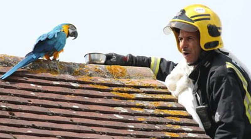 Bad-Mouthed Parrot Stuck On A Roof Tells Rescuers To F*ck Off