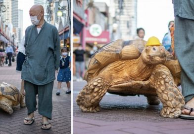 Massive Tortoise Named Bon-Chan Pleases Passersby In His Daily Walk