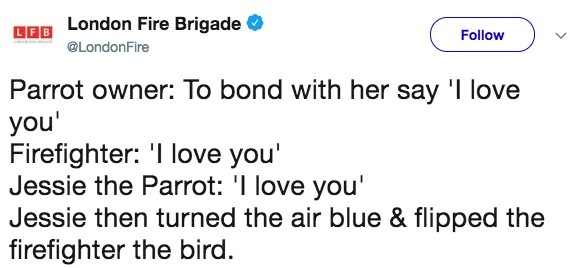 Potty-mouthed parrot