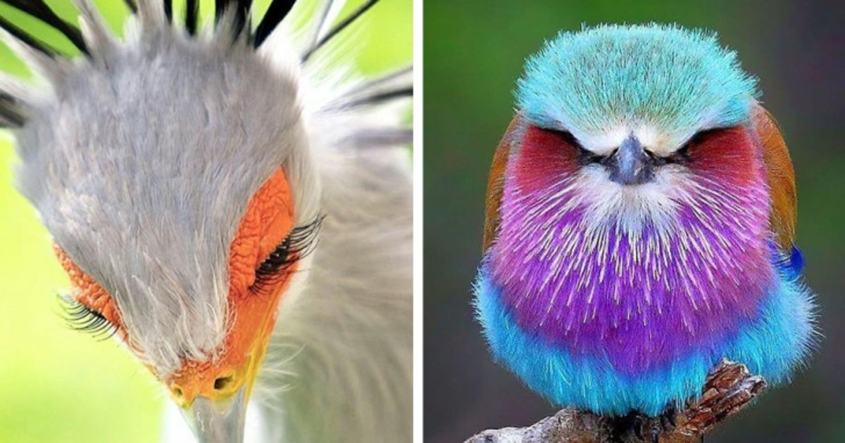 15 Pics Of Special And Fascinating Birds That Look Like They're From Another World
