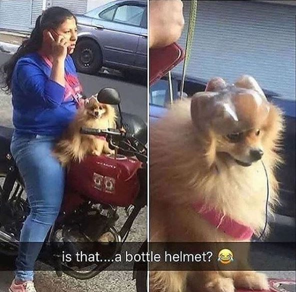 Hilarious snapchats of dogs