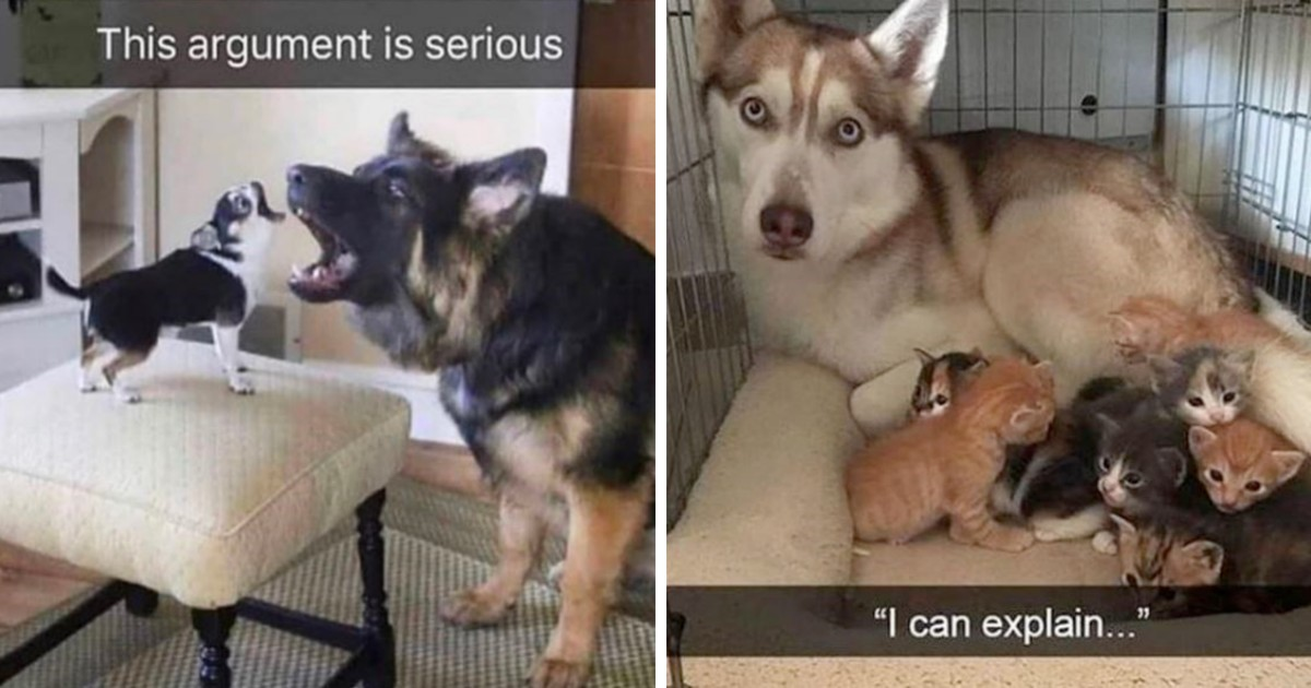 Funny Snapchats Prove That Life With Dogs Is Never Boring