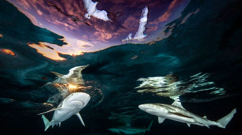 20 Breathtaking Winning Shots Of 2021 Underwater Photographer Of The Year Competition