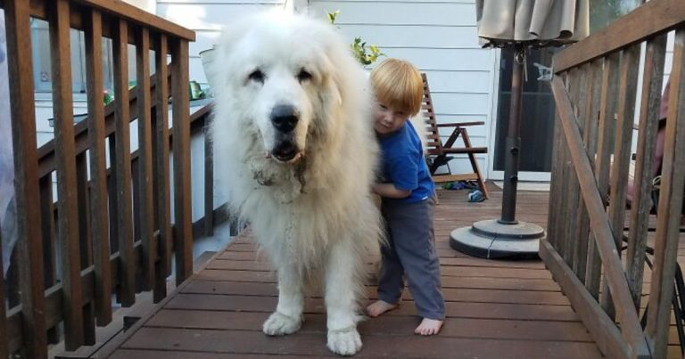 Adorably Massive Dogs That Don't Realize How Large They Are