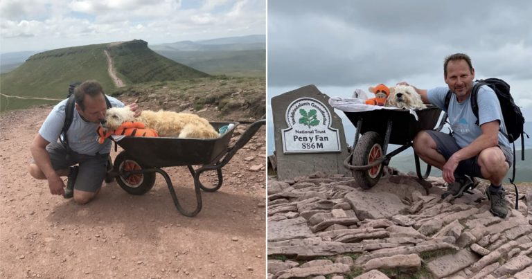 Man Takes His Dying Dog On One Last Adventure Together On A Wheelbarrow
