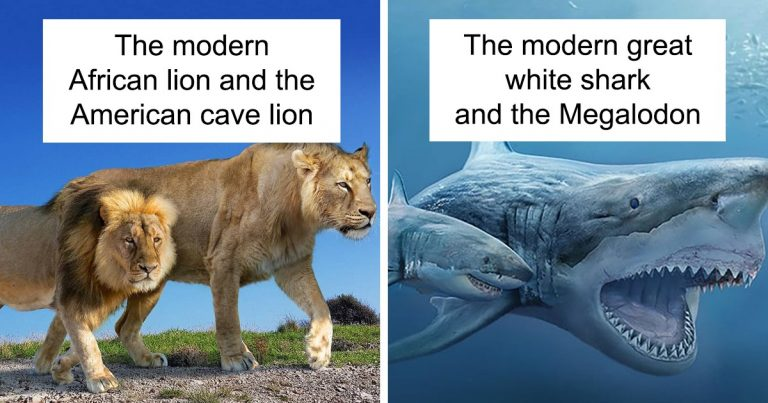 37 Size Comparisons Of Prehistoric Animal Ancestors And Their Modern Relatives