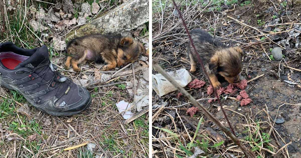Abandoned Pup Uses A Shoe As Shelter Till This Man Rescues Him