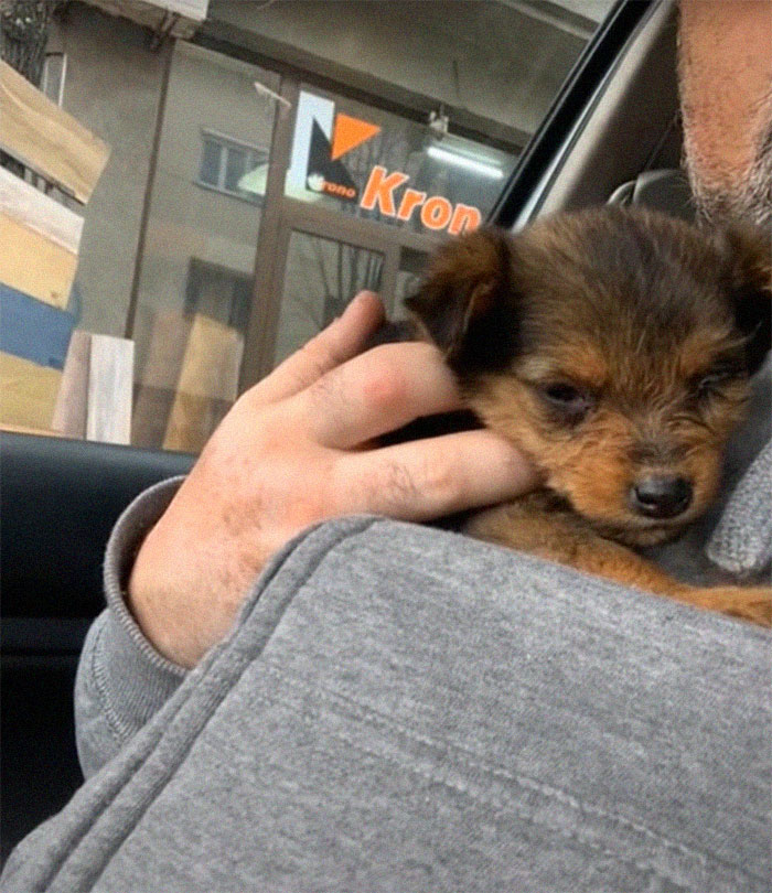Abandoned puppy rescued