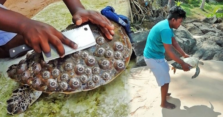 Local Hero Helps Sea Turtles By Removing Unnecessary Barnacles