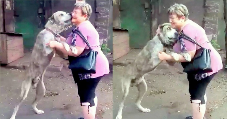 Mom in tears when finding her dog starving after being stolen 2 years ago