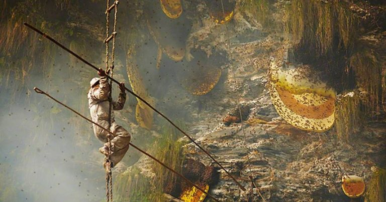 Stunning Photographs Of Nepal's Ancient Honey Hunting Tradition