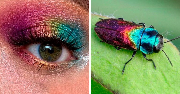 Artists Creates Eye Makeup Looks Matching With Insects