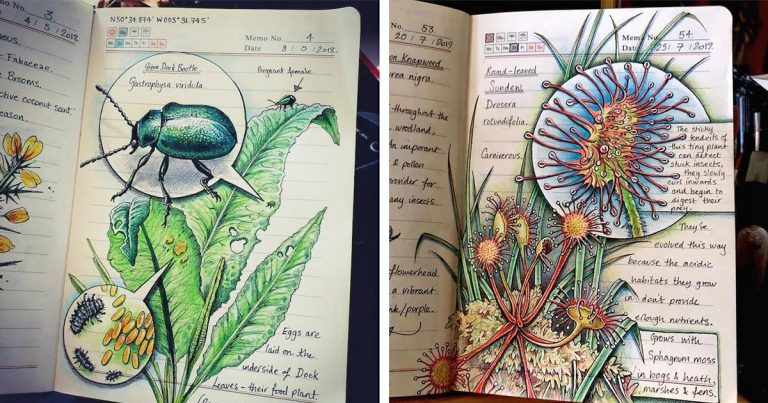 Illustrator Documents What She Found During Outdoor Adventures