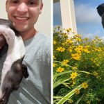 """This Italian Greyhound """"Melts"""" When Owner Photographs Him"""
